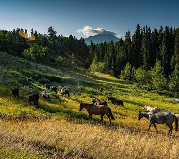 horse riding retreat in British Columbia